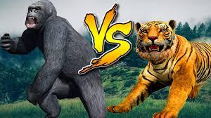 gorilla vs tiger real fight animals cartoons for children