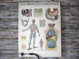 Study Anatomy And Physiology Online Interesting Online Anatomy And Physiology Online Anatomy Class