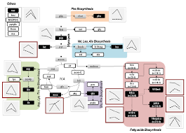 metabolites free full text influence of the rela activity on e
