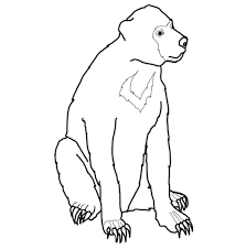 malayan sun bear coloring free printable coloring pages