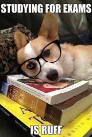 Studying Memes - studying for finals is ruff memes grade calculator