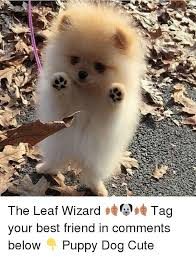 Cute Best Friend Memes - the leaf wizard tag your best friend in comments below