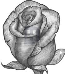 how to draw a rose bud rose bud step by step flowers pop