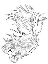 betta fish coloring pages download print betta fish coloring