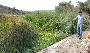 native plants in india how to purify wastewater using just plants israel21c