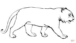 tiger without stripes coloring page free printable coloring pages