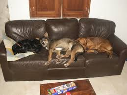 the best dog beds cheap dog beds for sale and more the three dog