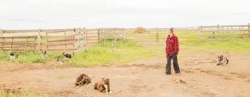 double j ranch australian shepherds rippa the stockdog a break and a visit with sarah martin of gs ranch