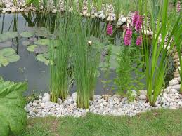 native pond plants helpful garden features hedgehog street