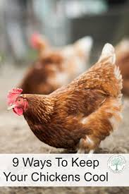440 best chickens u0026 coops images on pinterest chicken houses