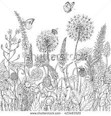wildflowers stock images royalty free images u0026 vectors shutterstock