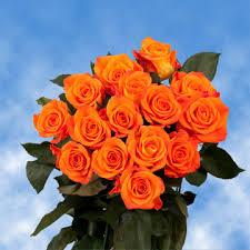 bright orange roses global