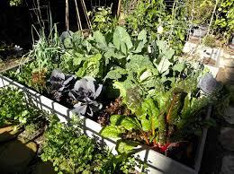 coastal winter vegetable garden southern california planting