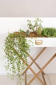 Wohnzimmer Einrichten Pflanzen Funvit Com Designerbett Polster