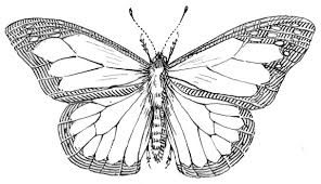 butterfly outline animals bugs butterfly