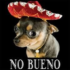 Mexican Sombrero Meme - phish net so a mexican walks into a phish show