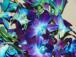 blue orchids for sale tinted blue dendrobium orchids flowers by category