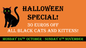 halloween cats cat rescue carcassonne u2013 raising awareness and funds for abandoned