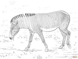 baby zebra coloring pages cute ba zebra coloring page free