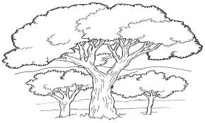 forest trees coloring pages contegri com