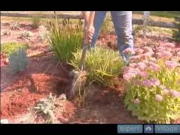 how to propagate ornamental grasses pt 2 how to dig up
