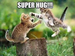 Cat Hug Meme - henry roth hugssss pinterest hug meme hug and animal