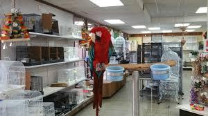 halloween city cerritos best pet shops for bird owners in oc cbs los angeles