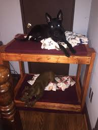 Dog Bunk Beds Furniture by Diy Dog Bunk Beds 8 Steps With Pictures