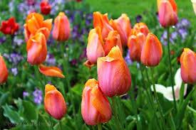 thanksgiving point tulip festival festivals thanksgiving and