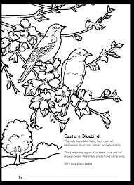 bluebird coloring page mia the blue bird coloring pages hellokids