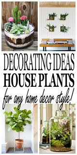 209 best houseplants images on pinterest indoor plants