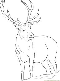 reindeer coloring page free deer coloring pages