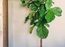 plant beautiful most common house plants house plants identify