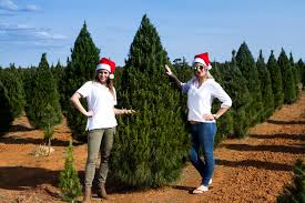 Natural Christmas Tree For Sale - real christmas trees melbourne
