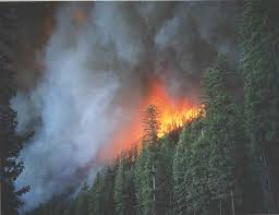 Canadian Wildland Fire Training by Wallpaper Photo Page For The Wildland Firefighter
