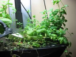 Aerogarden by January 2011 Indoor Gardening My Aerogarden And Houseplant Blog