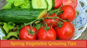 What To Plant In Spring Vegetable Garden by Spring Vegetable Growing Tips Bouquet Garni Nursery