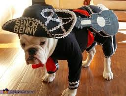 Sheep Dog Costume Halloween Senor Benny Mariachi Costume Costume Works Halloween