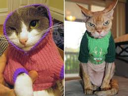 sweaters for cats sweaters for cats or klyker com