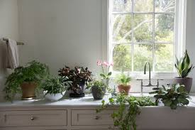 indoor trees that don t need light exquisite houseplants that don t need sunlight best living room