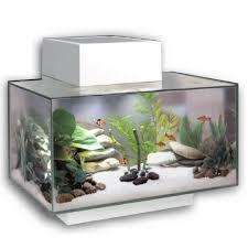 Fluval Edge Aquascape Fluval Edge 23l Gloss White Mentone Aquarium