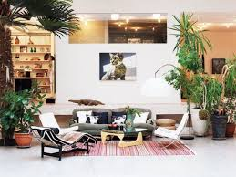 contemporary living room with houseplants where to put