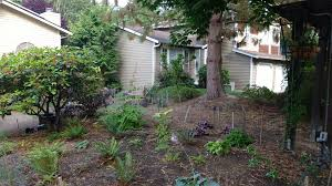 how much did it cost to replace my lawn with a garden pnw art