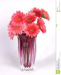 a flower vase with pink daisy flowers royalty free stock