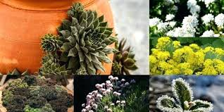 Rock Garden Plants Uk Rock Garden Plant Evergreen Rock Garden Plants Uk