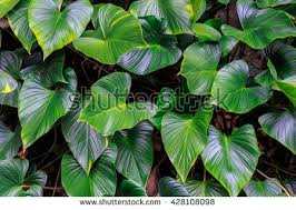green plants green leaves herbaceous ornamental stock photo