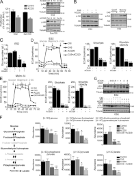 degradation of hk2 by chaperone mediated autophagy promotes
