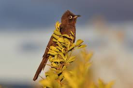 bird watching tours in western cape south africa grootbos