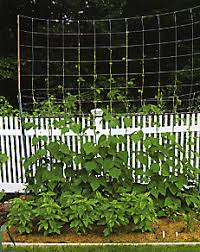 Pole Bean Trellis Of Beans Poles And Other Lessons Learned Old House New Garden