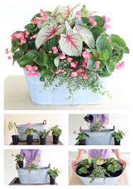 Summer Container Garden Ideas 66 Best Color Combinations Images On Pinterest Gardening